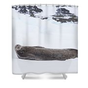 Weddell Seal On Ice Shower Curtain