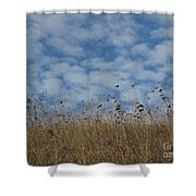 Weeds And Dappled Sky Shower Curtain
