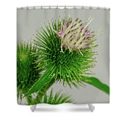 Weeds Can Be Beautiful Too Shower Curtain