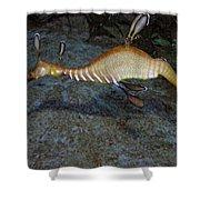 Weedy Sea Dragon Shower Curtain