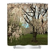 Weeping Asian Cherry Shower Curtain