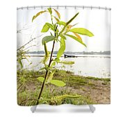 Weeping Willow Close To The River Shower Curtain