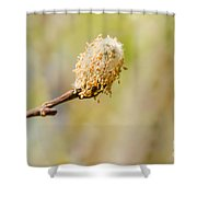 Weeping Willow Seed Shower Curtain