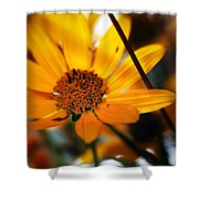 Welcome... Shower Curtain