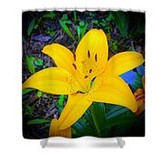 Welcoming Lily Shower Curtain