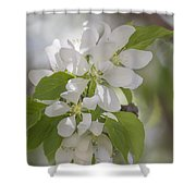 Welcoming Spring - 2  Shower Curtain