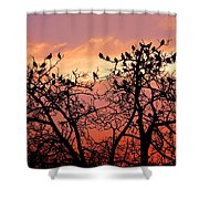 Wente Road Sunset Shower Curtain