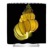 Wentletrap Seashell Shower Curtain