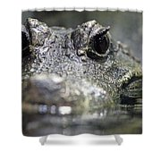 West African Dwarf Crocodile - Captive 03 Shower Curtain