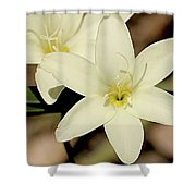West Australian Wildflowers - Orchid 2 Shower Curtain