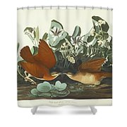 West Dove Shower Curtain