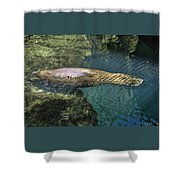 West Indian Manatee Shower Curtain
