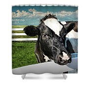 West Michigan Dairy Cow Shower Curtain