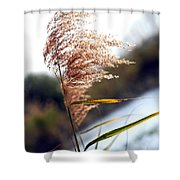 West Wind Today Shower Curtain