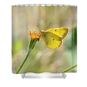 Wester Sulfur Butterfly Shower Curtain