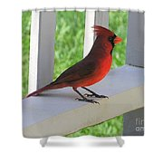 Western Cardinal Shower Curtain