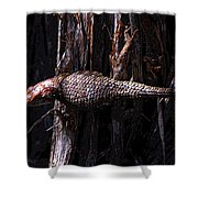 Western Fence Lizard Shower Curtain