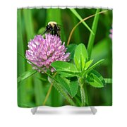 Western Honey Bee On Clover Flower Shower Curtain
