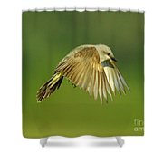 Western Kingbird Hovering Shower Curtain