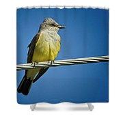 Western Kingbird Shower Curtain