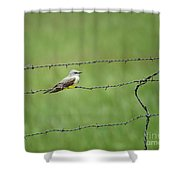 Western Kingbird Shower Curtain