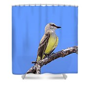 Western Kingbird Tyrannus Verticalis Shower Curtain