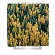 Western Larch Forest Shower Curtain