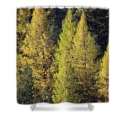Western Larch Shower Curtain