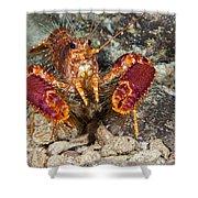 Western Lobster Shower Curtain