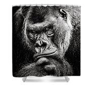 Western Lowland Gorilla Bw II Shower Curtain