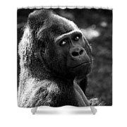 Western Lowland Gorilla Closeup Shower Curtain