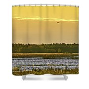 Western Marsh Harrier At Puurijarvi Shower Curtain