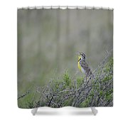 Western Meadowlark Morning Shower Curtain