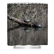 Western Painted Turtles On A Log Shower Curtain
