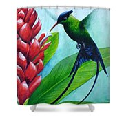 Western Streamertail Hummingbird Shower Curtain