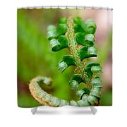 Western Swordfern Three Shower Curtain