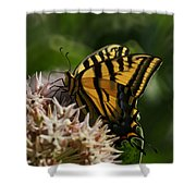 Western Tiger Swallowtail Shower Curtain