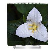 Wildflowers Western Trillium Oregon 1 Shower Curtain