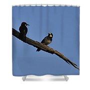 Western Woodpeckers Shower Curtain
