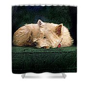 Westie Nap Shower Curtain