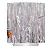 Weston Kingfisher Shower Curtain