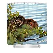 Wet Beaver Shower Curtain