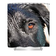 Wet Black Lab Shower Curtain