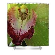 Wet Bloom Shower Curtain
