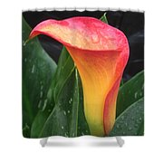 Wet Calla Lily Shower Curtain