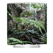 Wet Ferns Shower Curtain