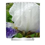 Wet Flower Raindrops Art Iris Flower Spring Baslee Troutman Shower Curtain