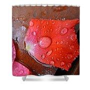 Wet Petal 1 Shower Curtain