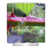 Wet Prick Shower Curtain