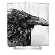 Wet Raven Shower Curtain